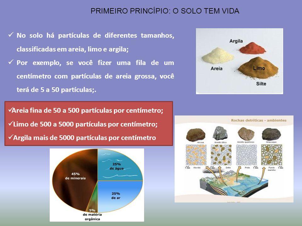 PRIMEIRO PRINCÍPIO: O SOLO TEM VIDA No solo há partículas de diferentes tamanhos, classificadas em areia, limo e argila; Por exemplo, se você fizer um