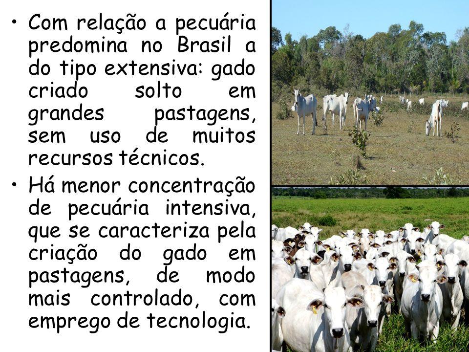 Com relação a pecuária predomina no Brasil a do tipo extensiva: gado criado solto em grandes pastagens, sem uso de muitos recursos técnicos. Há menor