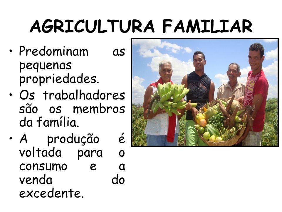 AGRICULTURA FAMILIAR Predominam as pequenas propriedades. Os trabalhadores são os membros da família. A produção é voltada para o consumo e a venda do