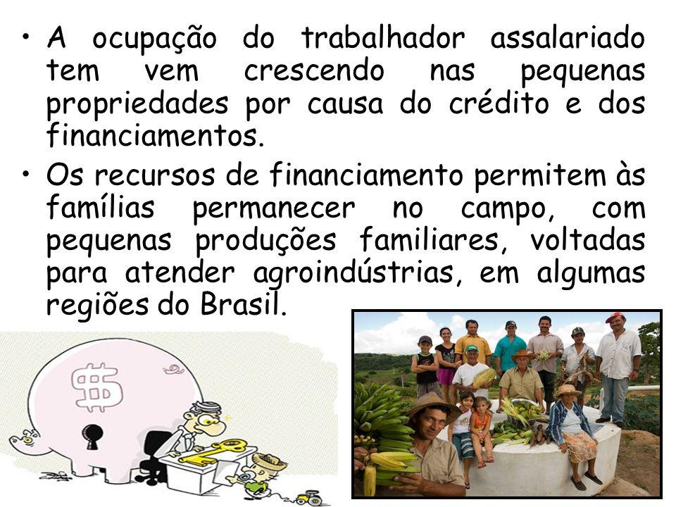A ocupação do trabalhador assalariado tem vem crescendo nas pequenas propriedades por causa do crédito e dos financiamentos. Os recursos de financiame