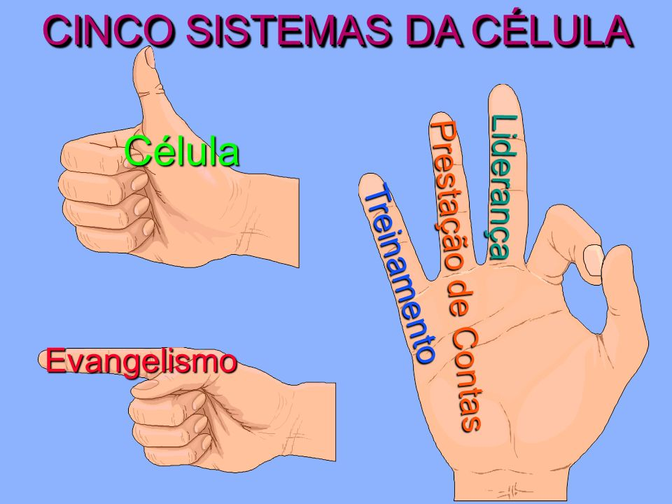 CINCO SISTEMAS DA CÉLULA Célula Todos os dedos trabalham em conexão com o polegar.