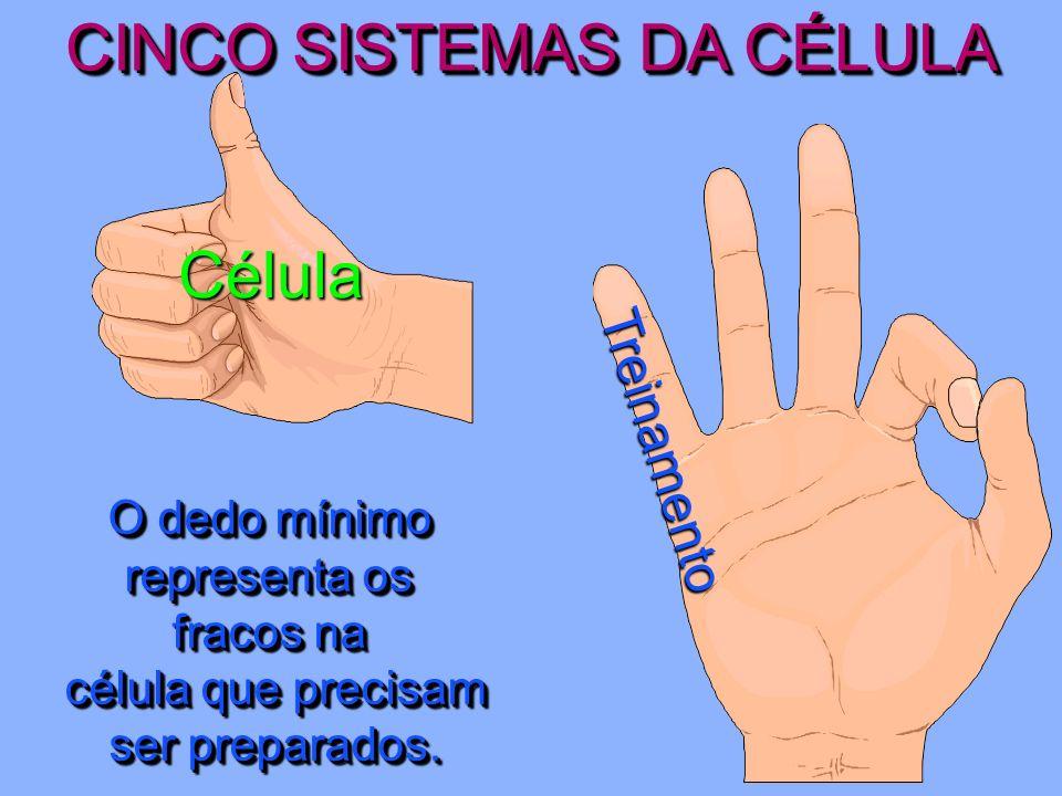 CINCO SISTEMAS DA CÉLULA Célula Prestação de Contas O dedo anelar é o dedo da aliança, o que sugere responsabilidade.