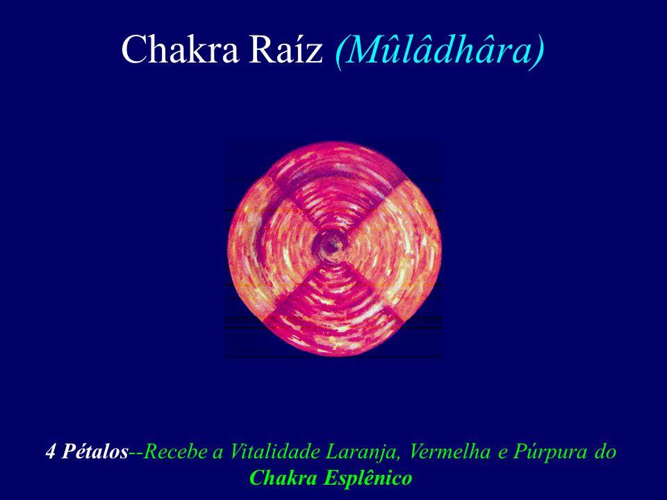 Chakra Raíz 8ª Toraxica Plexo do Coxis Chakra do Coração Chakra Umbilical 4ª Sacra Plexo Solar Chakra Esplênico 1ª Lombar Plexo do Baço Plexo Cardíaco