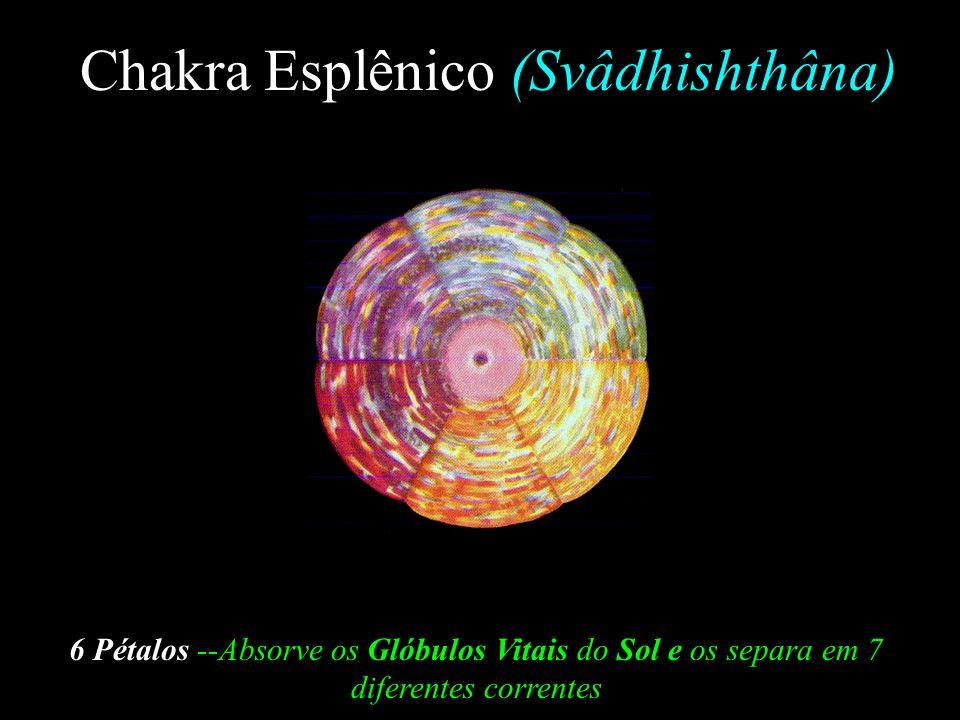Chakra Raíz (Mûlâdhâra) 4 Pétalos--Recebe a Vitalidade Laranja, Vermelha e Púrpura do Chakra Esplênico