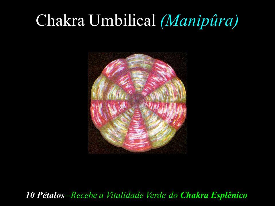 Chakra Esplênico (Svâdhishthâna) 6 Pétalos --Absorve os Glóbulos Vitais do Sol e os separa em 7 diferentes correntes