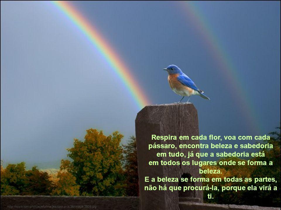http://www.tom-phillips.info/images/cool.pics.35/image.3509.jpg Respira em cada flor, voa com cada pássaro, encontra beleza e sabedoria em tudo, já que a sabedoria está em todos os lugares onde se forma a beleza.