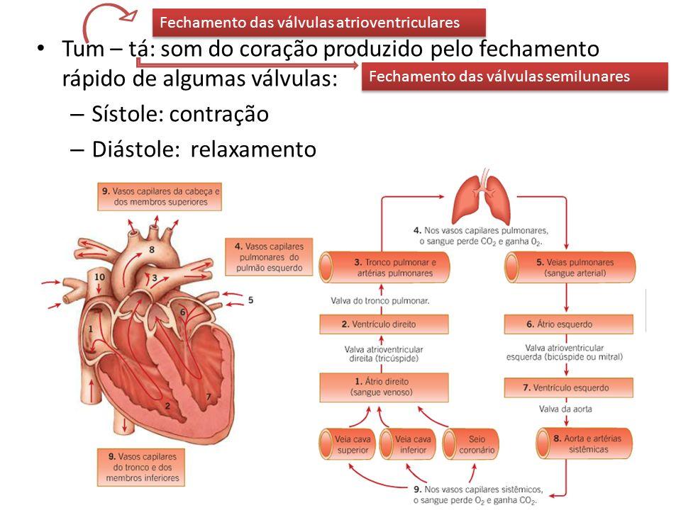 Tum – tá: som do coração produzido pelo fechamento rápido de algumas válvulas: – Sístole: contração – Diástole: relaxamento Fechamento das válvulas at