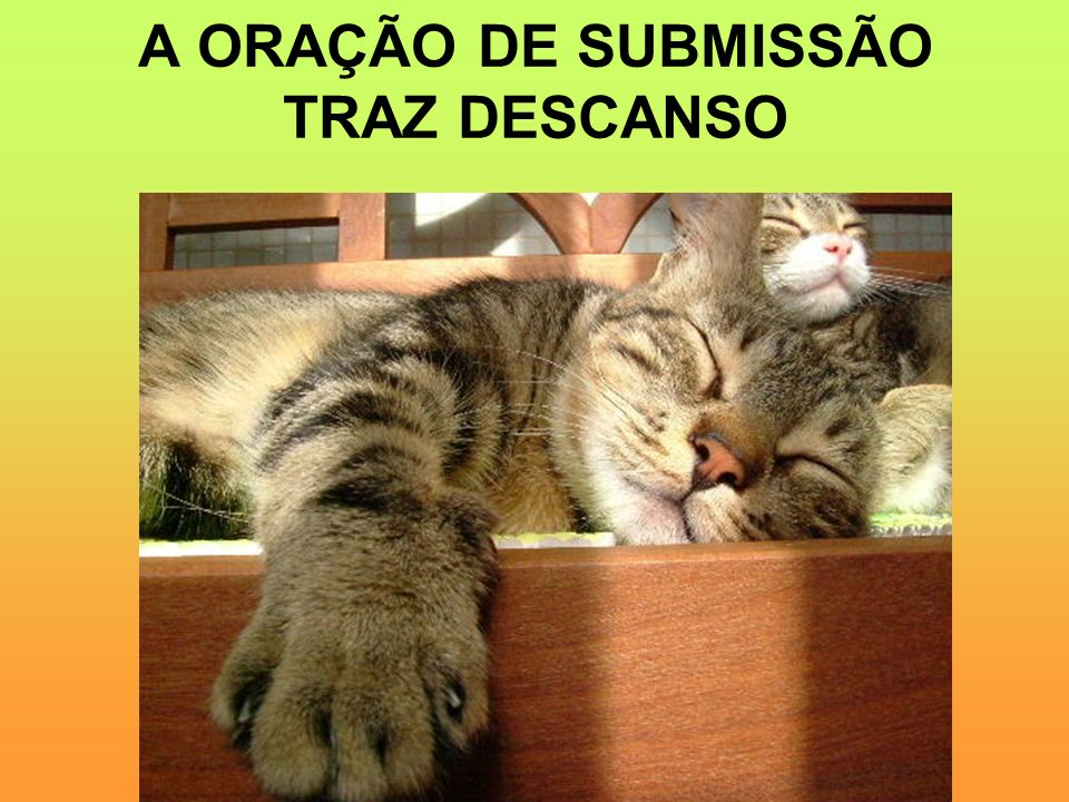 A ORAÇÃO DE SUBMISSÃO TRAZ DESCANSO