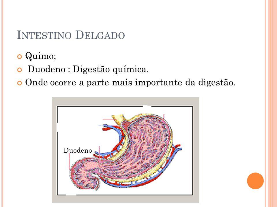 I NTESTINO D ELGADO Quimo; Duodeno : Digestão química. Onde ocorre a parte mais importante da digestão. Duodeno