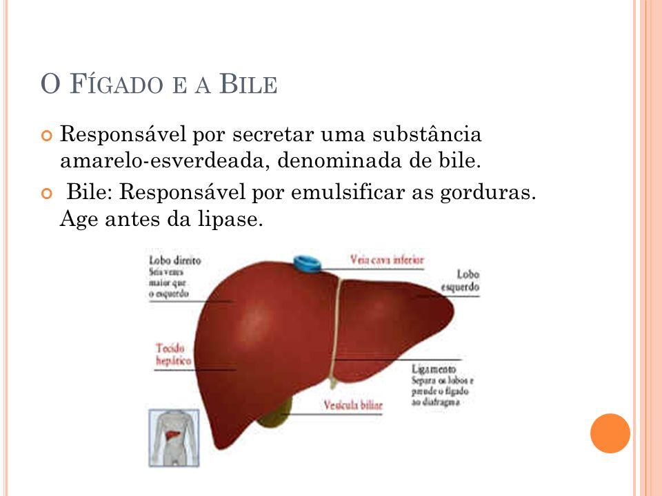 O F ÍGADO E A B ILE Responsável por secretar uma substância amarelo-esverdeada, denominada de bile. Bile: Responsável por emulsificar as gorduras. Age