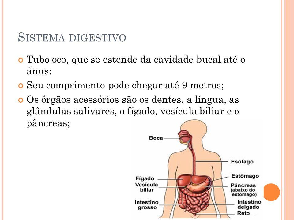 Tubo oco, que se estende da cavidade bucal até o ânus; Seu comprimento pode chegar até 9 metros; Os órgãos acessórios são os dentes, a língua, as glân