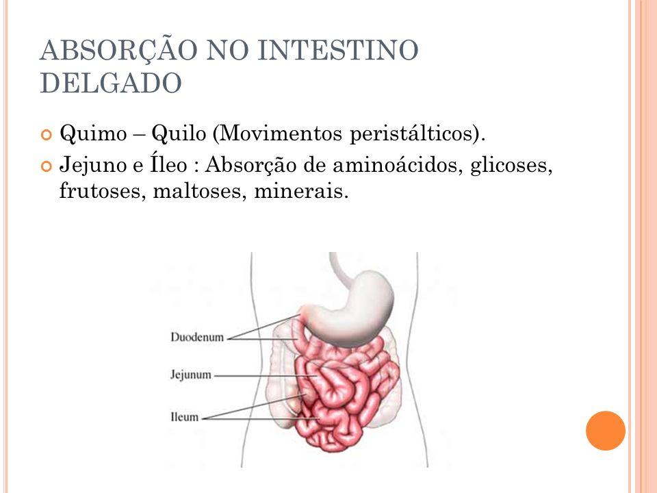 ABSORÇÃO NO INTESTINO DELGADO Quimo – Quilo (Movimentos peristálticos). Jejuno e Íleo : Absorção de aminoácidos, glicoses, frutoses, maltoses, minerai