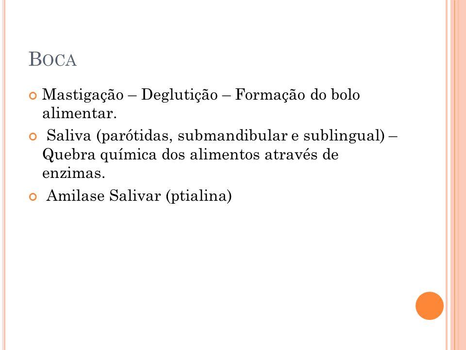 Saliva : Glândula sublingual, submandibular e parótida.
