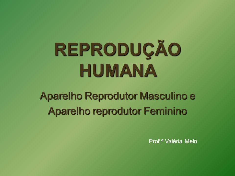 REPRODUÇÃO HUMANA Aparelho Reprodutor Masculino e Aparelho reprodutor Feminino Prof.ª Valéria Melo