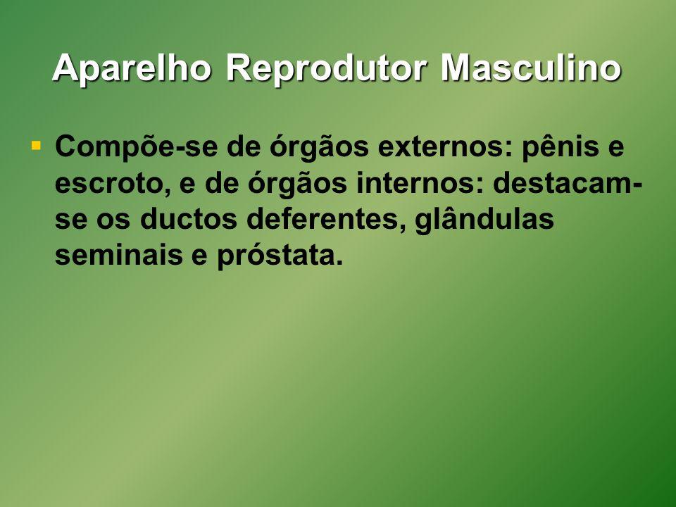 Aparelho Reprodutor Masculino Compõe-se de órgãos externos: pênis e escroto, e de órgãos internos: destacam- se os ductos deferentes, glândulas seminais e próstata.