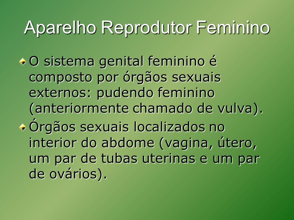 Aparelho Reprodutor Feminino O sistema genital feminino é composto por órgãos sexuais externos: pudendo feminino (anteriormente chamado de vulva).