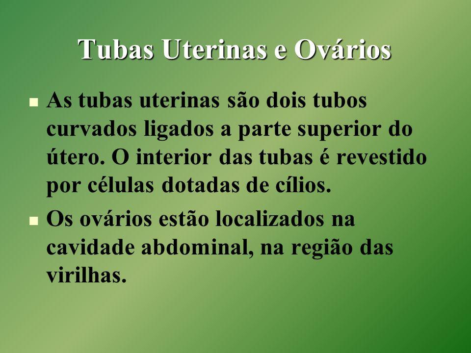 Tubas Uterinas e Ovários As tubas uterinas são dois tubos curvados ligados a parte superior do útero. O interior das tubas é revestido por células dot
