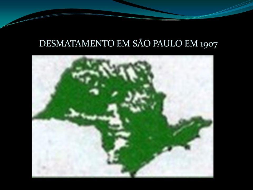 DESMATAMENTO EM SÃO PAULO EM 1907