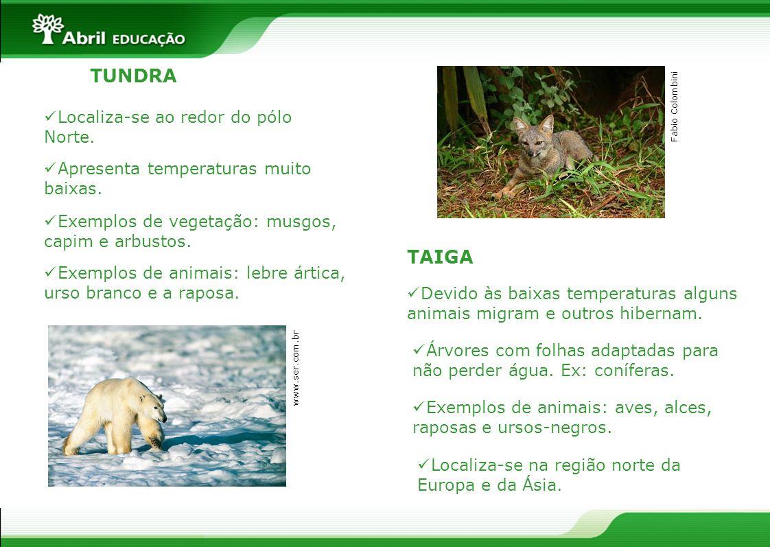 TAIGA Localiza-se ao redor do pólo Norte. Apresenta temperaturas muito baixas. Exemplos de vegetação: musgos, capim e arbustos. Exemplos de animais: l