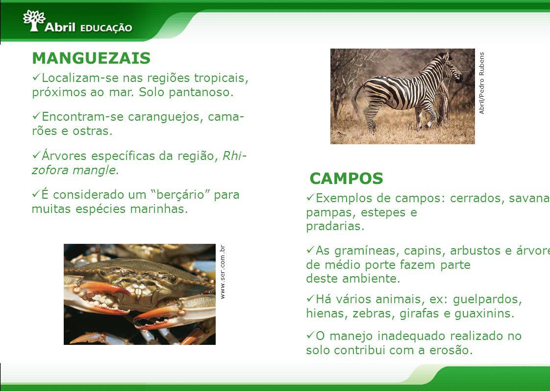 MANGUEZAIS É considerado um berçário para muitas espécies marinhas. Localizam-se nas regiões tropicais, próximos ao mar. Solo pantanoso. Encontram-se
