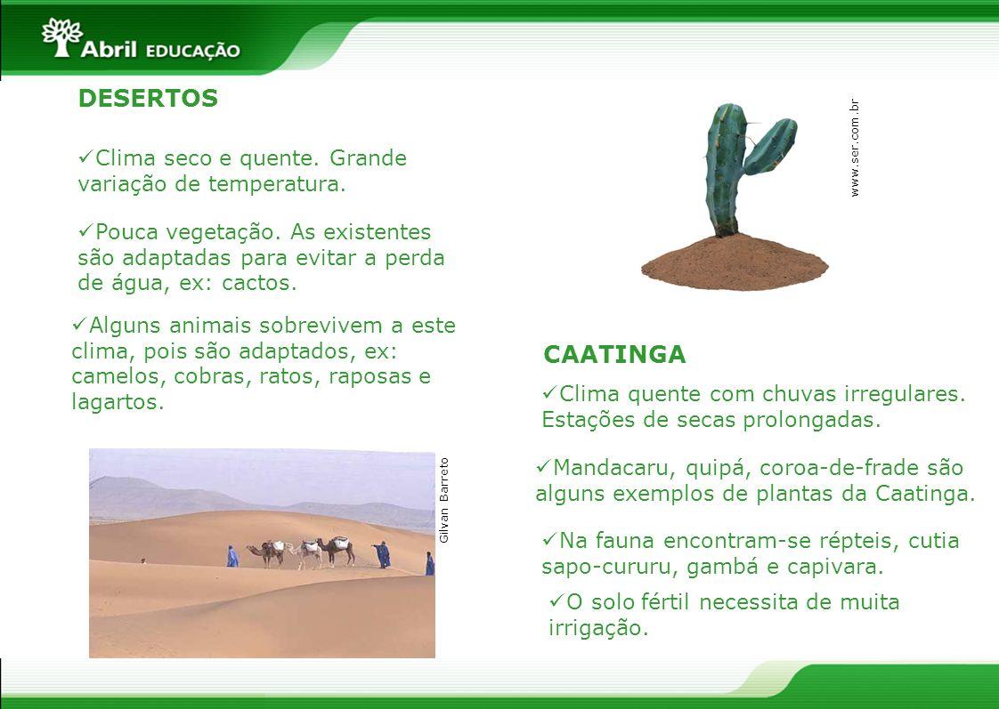 CAATINGA Na fauna encontram-se répteis, cutia sapo-cururu, gambá e capivara. Mandacaru, quipá, coroa-de-frade são alguns exemplos de plantas da Caatin