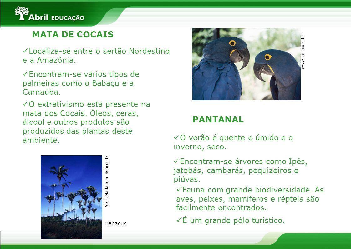 PANTANAL MATA DE COCAIS Localiza-se entre o sertão Nordestino e a Amazônia. Encontram-se vários tipos de palmeiras como o Babaçu e a Carnaúba. O extra
