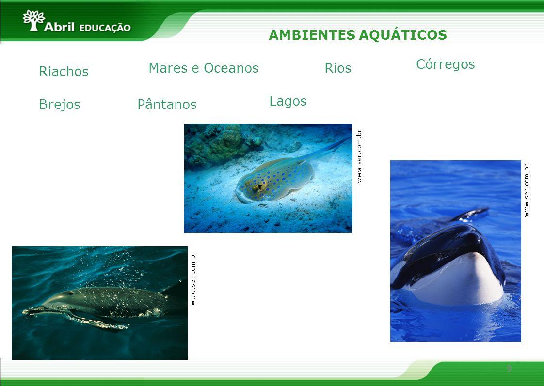 9 AMBIENTES AQUÁTICOS Riachos Rios Córregos Lagos PântanosBrejos Mares e Oceanos www.ser.com.br
