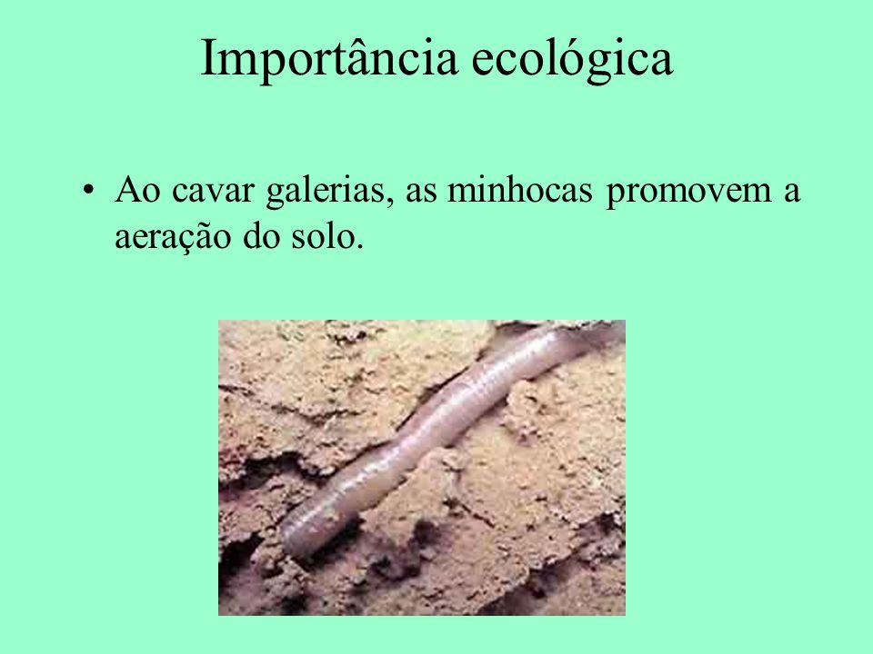 Importância ecológica Ao cavar galerias, as minhocas promovem a aeração do solo.