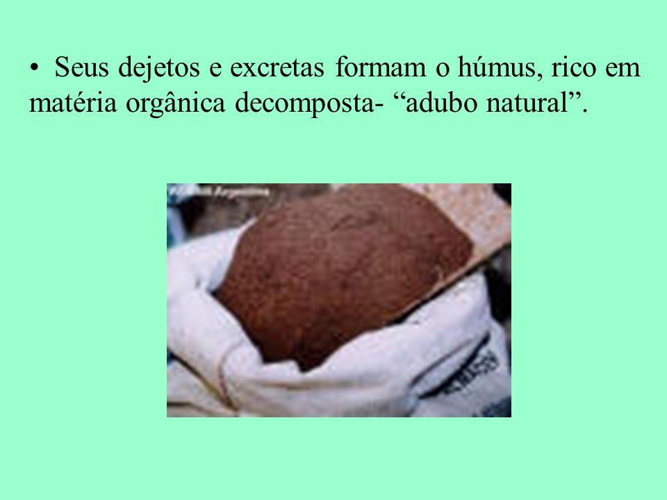 Seus dejetos e excretas formam o húmus, rico em matéria orgânica decomposta- adubo natural.