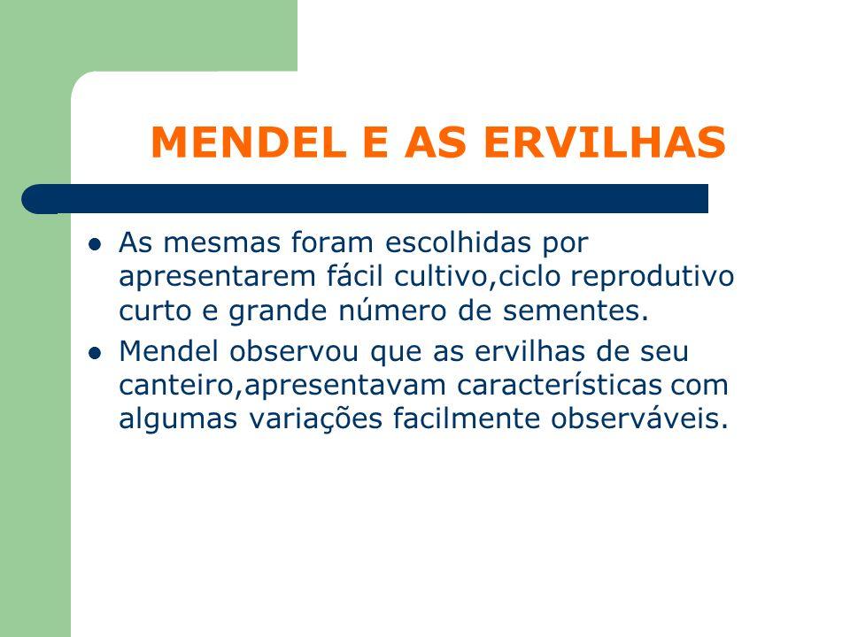 MENDEL E AS ERVILHAS As mesmas foram escolhidas por apresentarem fácil cultivo,ciclo reprodutivo curto e grande número de sementes. Mendel observou qu