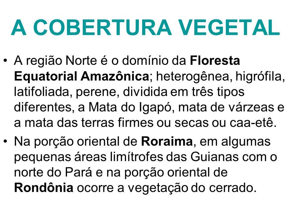 A COBERTURA VEGETAL A região Norte é o domínio da Floresta Equatorial Amazônica; heterogênea, higrófila, latifoliada, perene, dividida em três tipos d