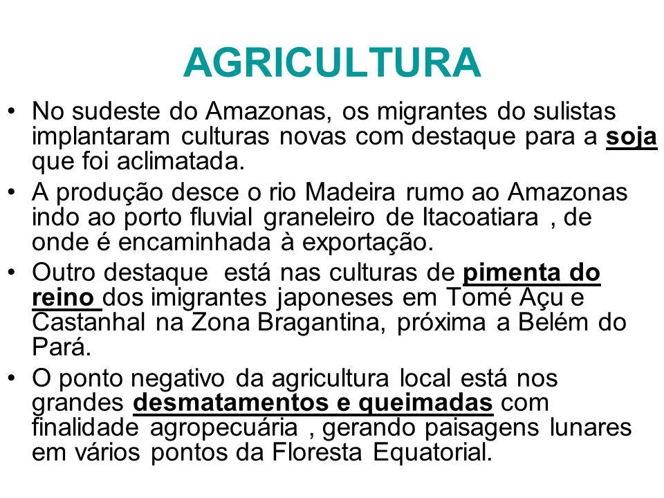AGRICULTURA No sudeste do Amazonas, os migrantes do sulistas implantaram culturas novas com destaque para a soja que foi aclimatada. A produção desce