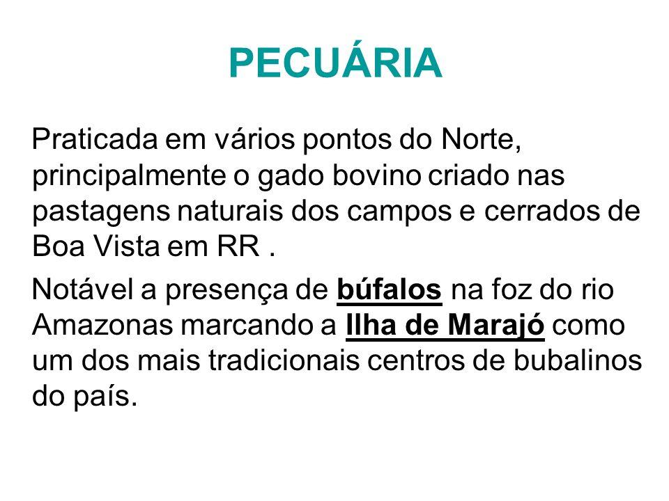 PECUÁRIA Praticada em vários pontos do Norte, principalmente o gado bovino criado nas pastagens naturais dos campos e cerrados de Boa Vista em RR. Not