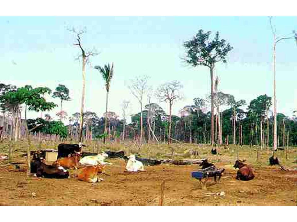 MINERAÇÃO Muito desenvolvida em grandes projetos como a área polivalente de Carajás, com importantes reservas em exploração de ferro, manganês, cobre, ouro, bauxita, estanho, níquel, etc.