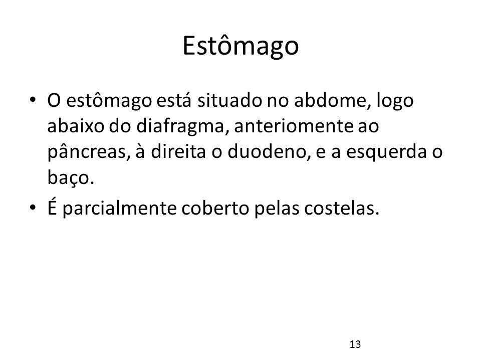 Estômago Fonte: NETTER, Frank H.. Atlas de Anatomia Humana. 2ed. Porto Alegre: Artmed, 2000. 14