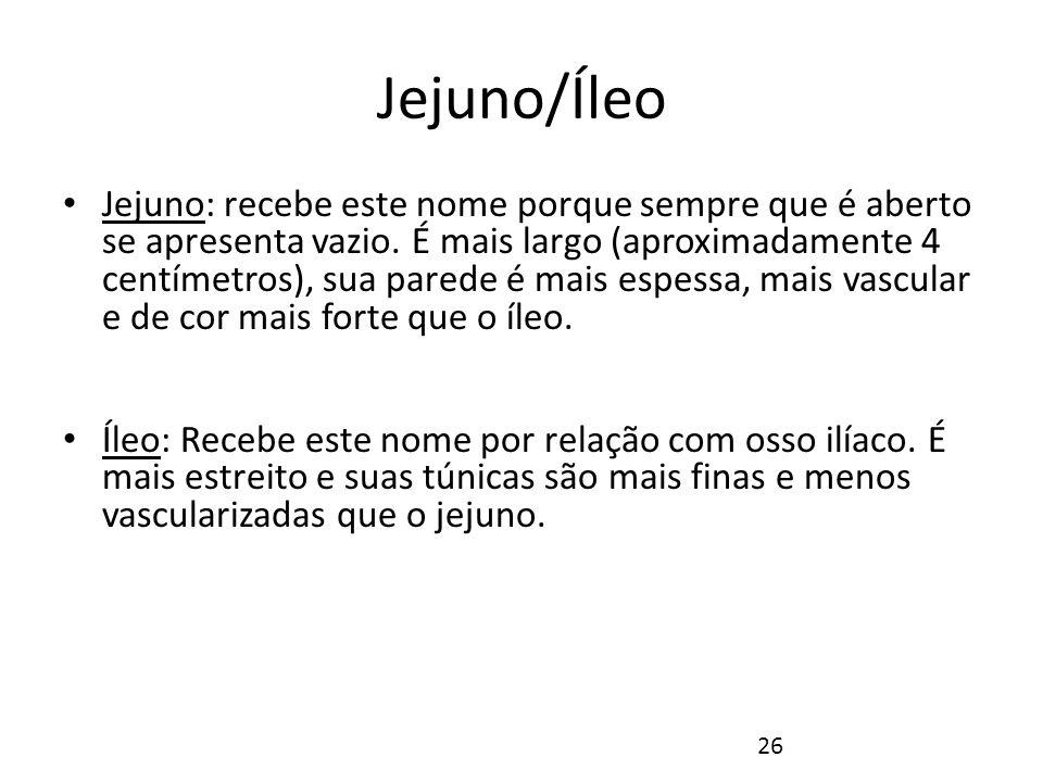 Jejuno/Íleo Juntos, o jejuno e o íleo medem 6 a 7 metros de comprimento.