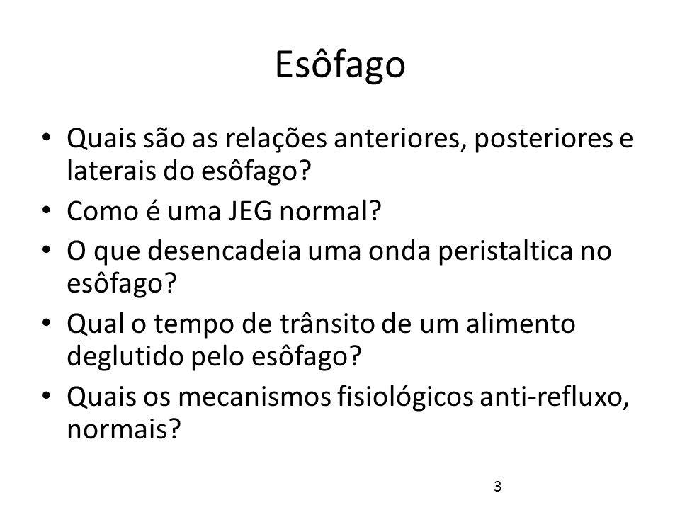 Esôfago O esôfago é um tubo fibro-músculo-mucoso que se estende entre a faringe e o estômago.