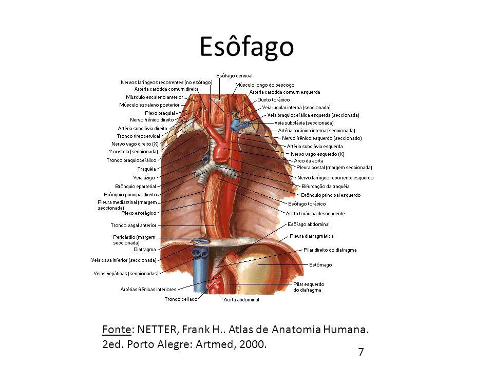 Esôfago Porções do Esôfago Fonte: NETTER, Frank H..