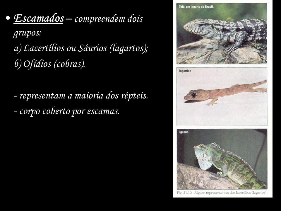 Escamados – compreendem dois grupos: a) Lacertílios ou Sáurios (lagartos); b) Ofídios (cobras). - representam a maioria dos répteis. - corpo coberto p