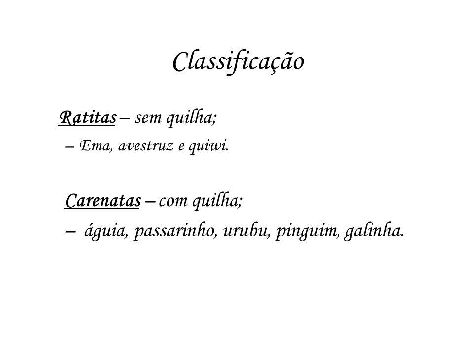 Classificação Ratitas – sem quilha; –Ema, avestruz e quiwi. Carenatas – com quilha; – águia, passarinho, urubu, pinguim, galinha.