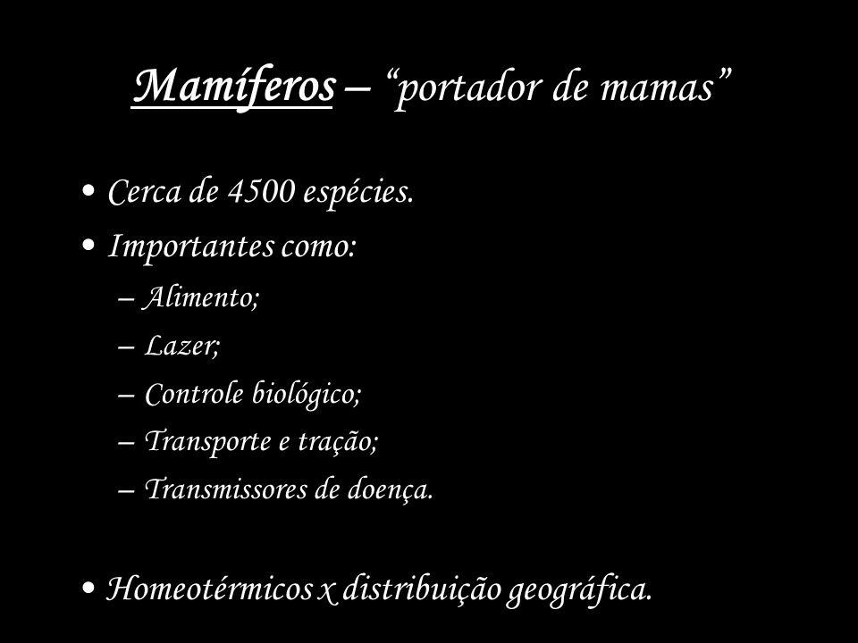 Mamíferos – portador de mamas Cerca de 4500 espécies. Importantes como: –Alimento; –Lazer; –Controle biológico; –Transporte e tração; –Transmissores d