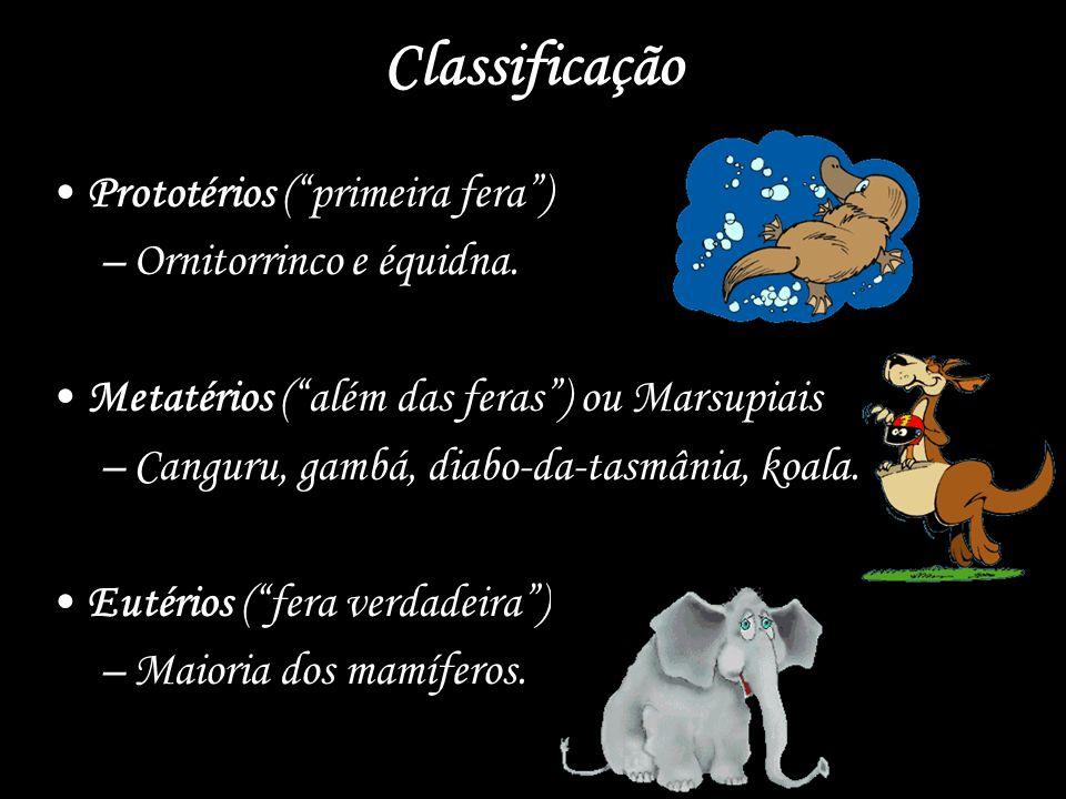 Classificação Prototérios (primeira fera) –Ornitorrinco e équidna. Metatérios (além das feras) ou Marsupiais –Canguru, gambá, diabo-da-tasmânia, koala