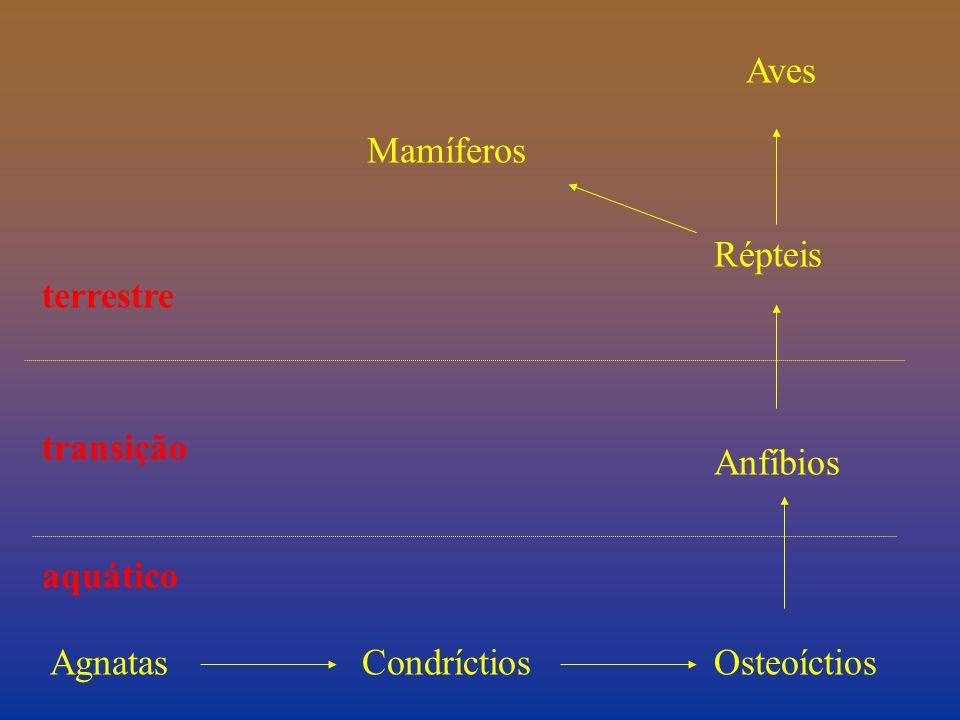 AgnatasCondríctiosOsteoíctios Anfíbios Répteis Mamíferos Aves terrestre aquático transição