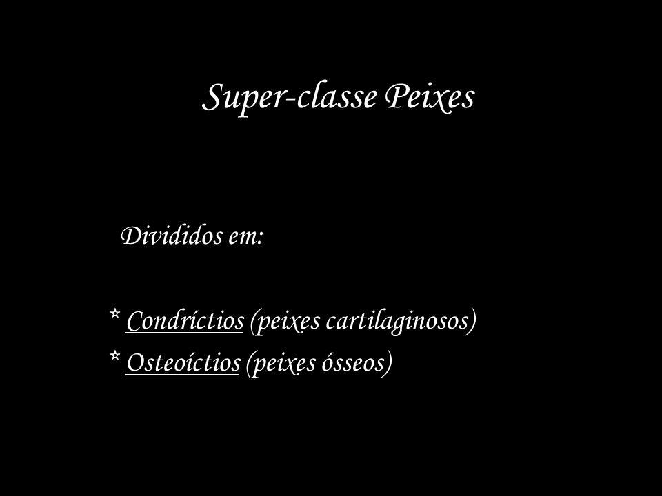 Super-classe Peixes Divididos em: * Condríctios (peixes cartilaginosos) * Osteoíctios (peixes ósseos)