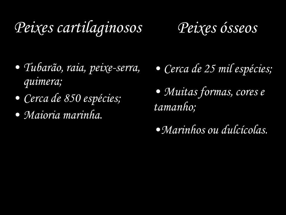 Peixes cartilaginosos Tubarão, raia, peixe-serra, quimera; Cerca de 850 espécies; Maioria marinha. Cerca de 25 mil espécies; Muitas formas, cores e ta