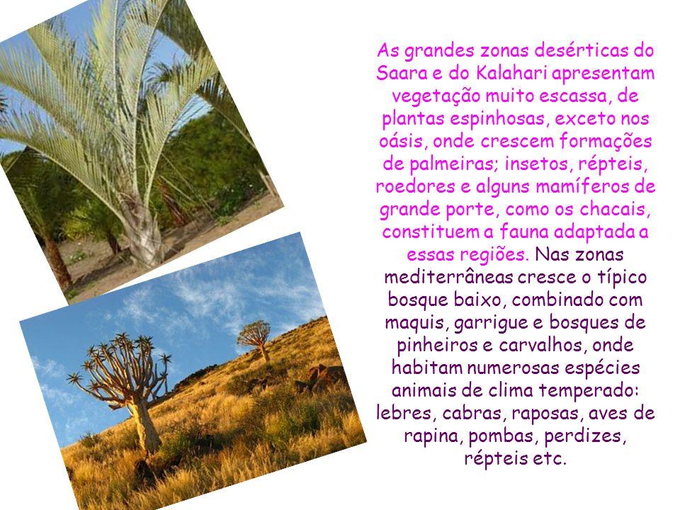 As grandes zonas desérticas do Saara e do Kalahari apresentam vegetação muito escassa, de plantas espinhosas, exceto nos oásis, onde crescem formações de palmeiras; insetos, répteis, roedores e alguns mamíferos de grande porte, como os chacais, constituem a fauna adaptada a essas regiões.