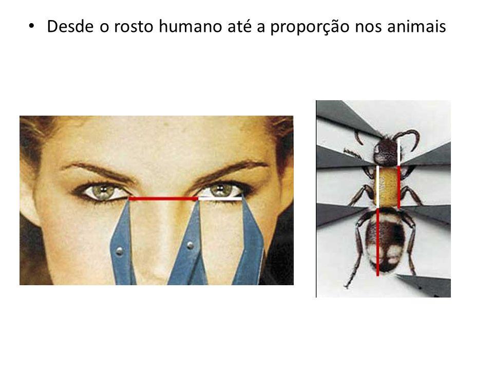Desde o rosto humano até a proporção nos animais