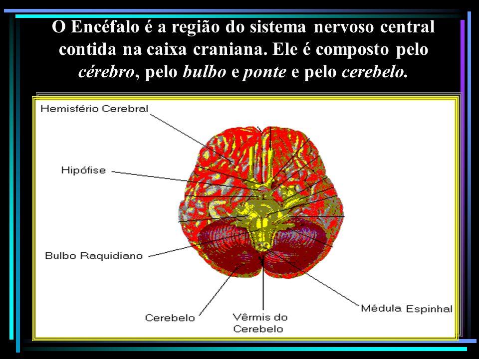 O Encéfalo é a região do sistema nervoso central contida na caixa craniana. Ele é composto pelo cérebro, pelo bulbo e ponte e pelo cerebelo.