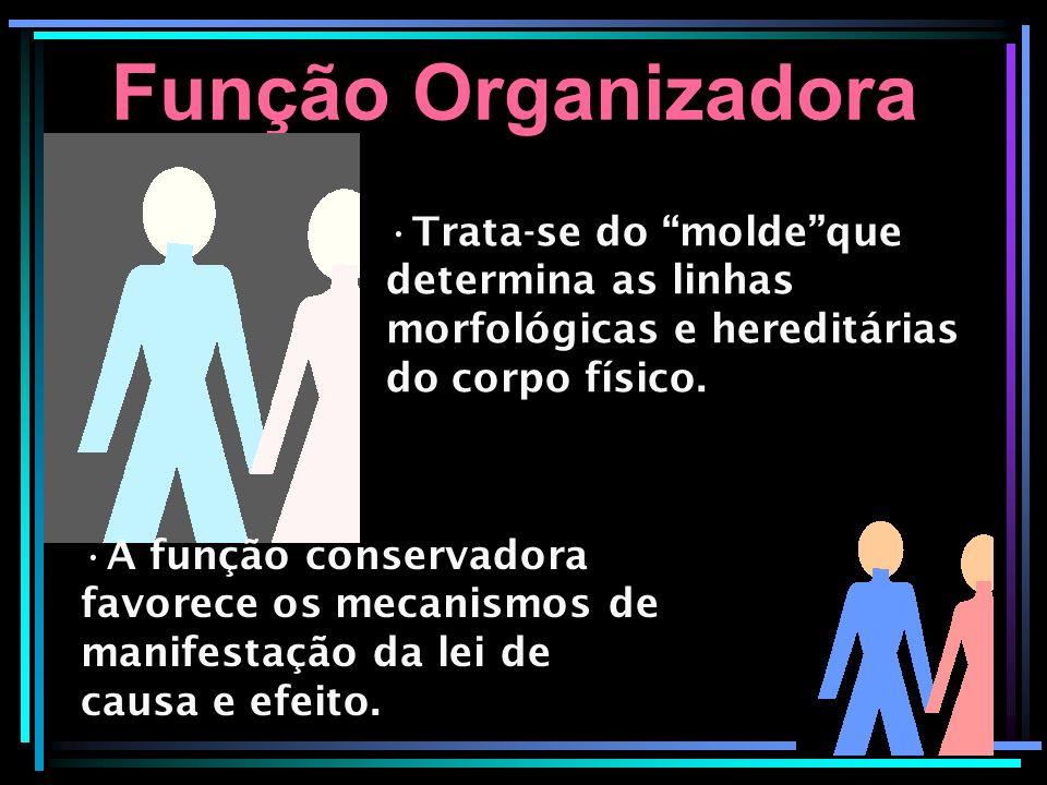 Função Organizadora Trata-se do moldeque determina as linhas morfológicas e hereditárias do corpo físico. A função conservadora favorece os mecanismos