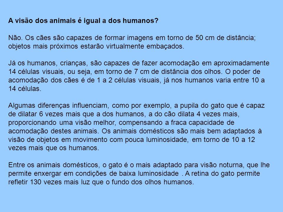 A visão dos animais é igual a dos humanos? Não. Os cães são capazes de formar imagens em torno de 50 cm de distância; objetos mais próximos estarão vi